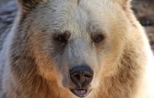 bear-89000_960_720_1_32